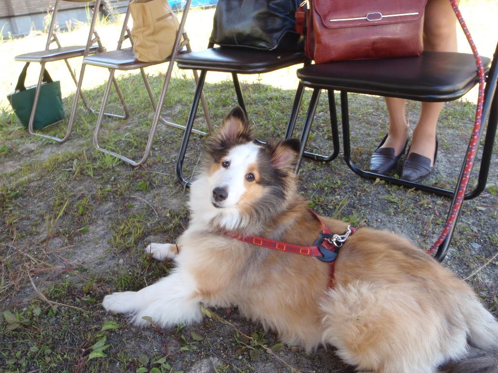 地鎮祭と犬
